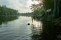 平静的沼泽地风景在Okefenokee 库存图片
