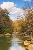 平静的流森林 免版税库存图片
