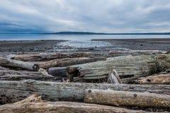 平静的皮吉特湾处于低潮中 库存图片
