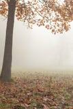 平静的秋天横向-结构树和雾 库存照片