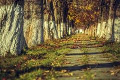 平静的秋天风景 库存图片