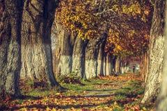 平静的秋天风景 免版税库存照片