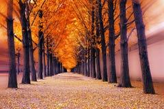 平静的路径横向在公园 库存图片