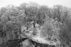 平静的结冰的森林 图库摄影
