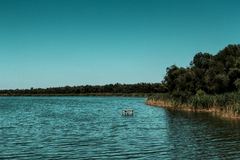 平静的水 图库摄影