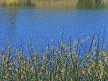 平静的waterscape 免版税图库摄影