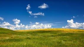 平静 草对天空 免版税库存图片