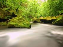 水平面在山河的新鲜的绿色树下 新鲜的春天空气在晚上 免版税库存图片