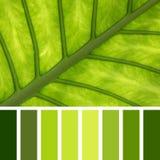 细平面海绵体叶子调色板 免版税库存照片