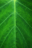细平面海绵体叶子 免版税库存照片