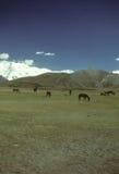 平面的吃草的马干草原 库存图片