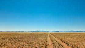 平直的沙漠土路轨道通过往山的一片草原 库存照片