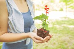年幼植物准备好幼木 免版税库存图片