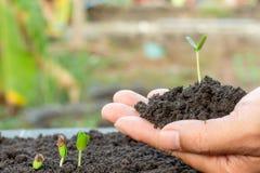 年幼植物在手中 库存图片