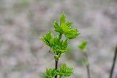 年幼植物逃命在春天 库存照片