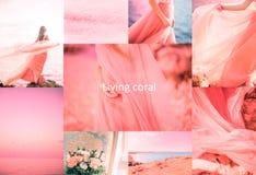 年的居住的珊瑚颜色2019年 免版税库存图片