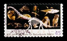 200年自然历史博物馆,柏林, serie,大约2010年 库存照片