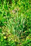 年轻丛在春天草甸的草 库存图片