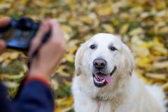 年轻人做照片与photocamera的金毛猎犬 免版税库存照片