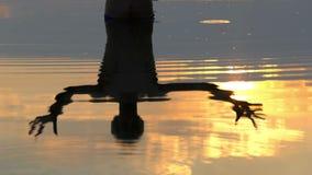 年轻人在湖水域中站立并且举手在精采日落 股票视频