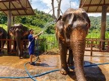 年轻人洗涤一头大象在圣所在清迈泰国 免版税库存图片