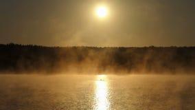 年轻人游泳在一个朦胧的金黄湖爬行 股票录像