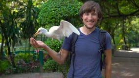 年轻人的超级慢动作射击获得乐趣在鸟公园并且喂养从他的手的白色苍鹭 股票视频