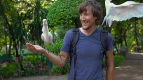 年轻人的超级慢动作射击获得乐趣在鸟公园并且喂养从他的手的白色苍鹭 影视素材