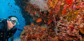 年轻人轻潜水员探索的珊瑚礁 免版税库存图片