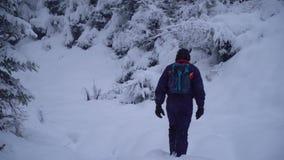 年轻人通过一个多雪的森林年轻人相当旅游告密者单独走通过雪漂泊 他在他附近看 股票视频