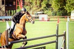 年轻人骑师乘驾美丽的棕色马和跃迁在裤裆在马术运动特写镜头 图库摄影