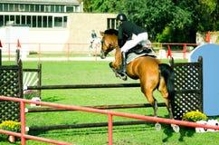 年轻人骑师乘驾美丽的棕色马和跃迁在裤裆在马术运动特写镜头 免版税库存照片