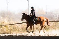 年轻俏丽的女孩-骑一匹马在冬天早晨 库存图片