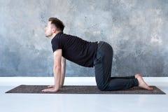 年轻信奉瑜伽者人实践瑜伽asana bitilasana或猫母牛姿势 库存照片