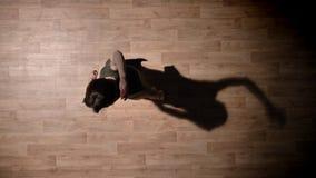 年轻典雅的女孩剪影在木地板,芭蕾概念,运动概念,顶面射击上跳舞 股票视频