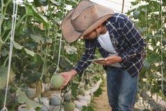 年轻农夫分析瓜作用成长对温室农场的,使用一种片剂的农艺师在农业领域 免版税库存照片