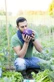 年轻农夫在他的庭院里嗅到紫色茄子 库存照片