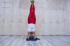 年轻可爱的信奉瑜伽者女子实践的瑜伽概念,站立在Pincha Mayurasana锻炼的变异,手倒立姿势,运作 免版税库存照片