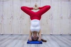 年轻可爱的信奉瑜伽者女子实践的瑜伽概念,站立在Pincha Mayurasana锻炼的变异,手倒立姿势,运作 免版税库存图片