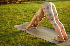 年轻可爱的室外女孩实践的瑜伽 在杉木常设夏天日落结构树二之后 库存图片