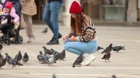 年轻可爱的蹲-在镇中心中间的妇女哺养的鸽子 股票录像