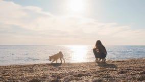 年轻和好奇白色小狗siba inu在海滩跑早晨,当使用与深色的女孩慢动作时 股票录像