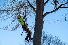 年轻在树的人上升的绳索 免版税库存照片