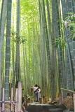 年轻夫妇竹森林巨大的树,镰仓,日本 免版税库存图片