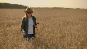 年轻女人农夫与在领域的片剂一起使用在日落 一个小企业概念的所有者 股票录像