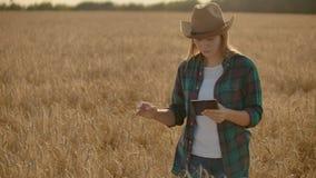 年轻女人农夫与在领域的片剂一起使用在日落 一个小企业概念的所有者 影视素材
