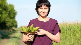 年轻女人农夫横跨领域去并且装入她的手玉米收获  种田的概念 股票录像