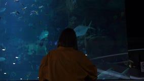 年轻女人剪影在巨大的水族馆背景中有热带鱼的 股票视频