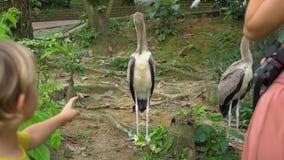 年轻女人和她小的儿子参观一个鸟公园在热带 股票录像
