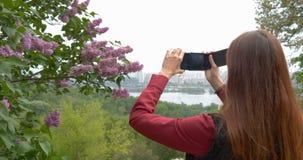 年轻女人在丁香附近做与电话的照片在公园 股票视频
